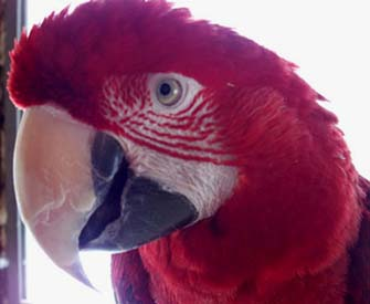 Fred Macaw